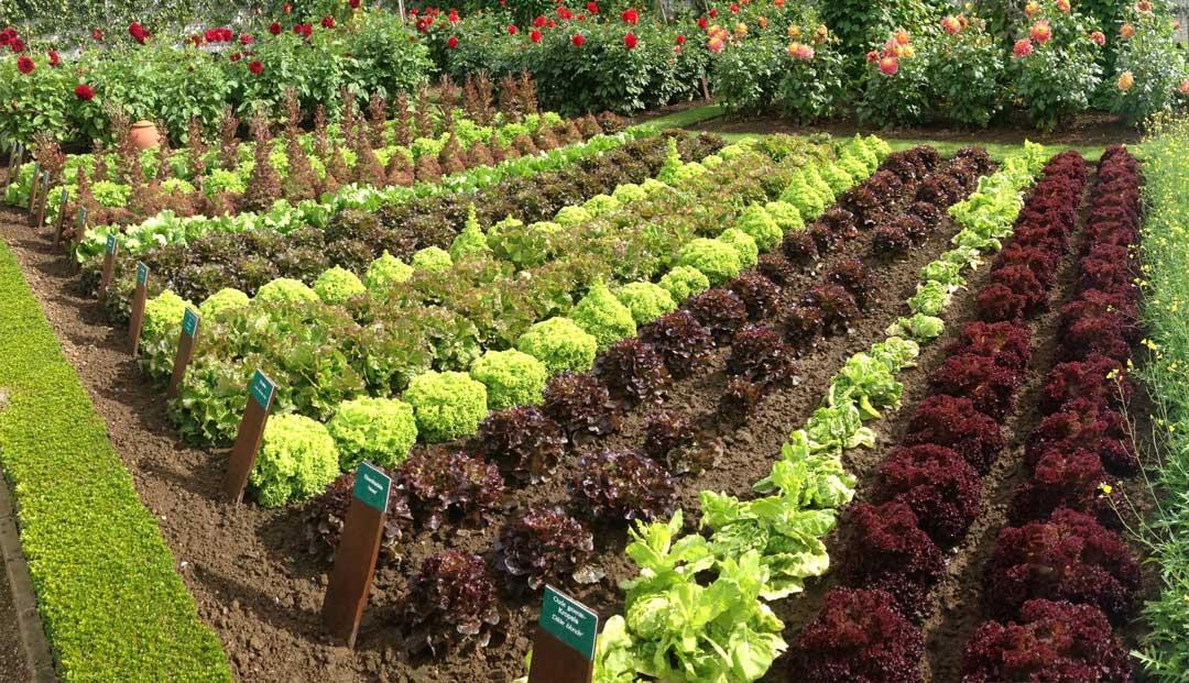 ¿Cómo empezar a crear un huerto ecológico?